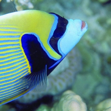 007_colourful_reef_fish_snorkeling_rodrigues