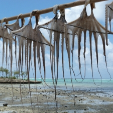 035_ourite_drying_in_the_sun_rodrigues