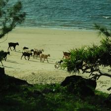068_typica_beach_scene_rodrigues