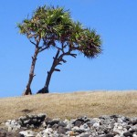 01_bakwa_tree_bakwa_lodge_rodrigues_island