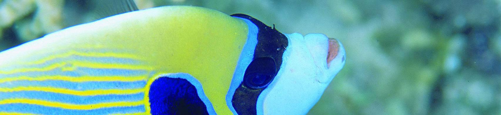 02. snorkeling