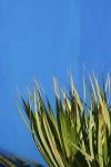 04_vacoas_plant_bakwa_lodge