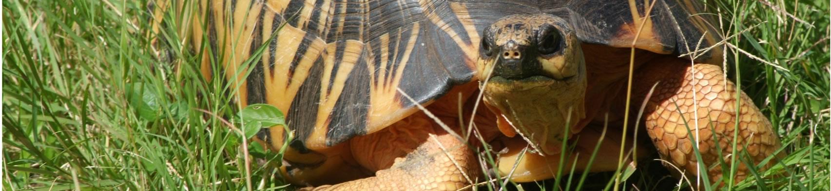 09 giant tortoise