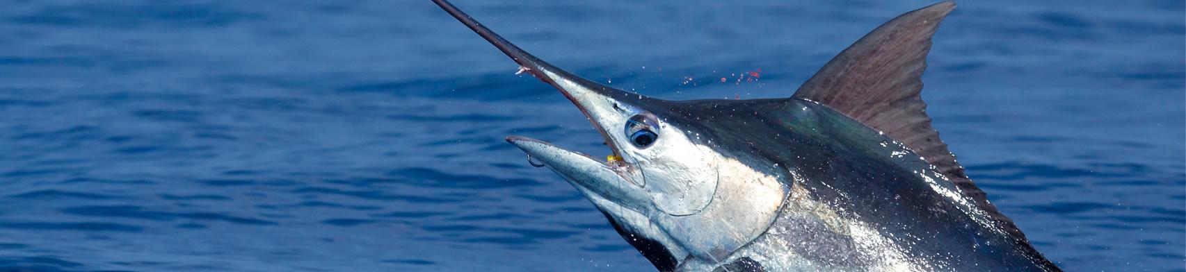 10_deep_sea_fishing
