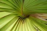13_vacoas_tree_pattern_bakwa_lodge