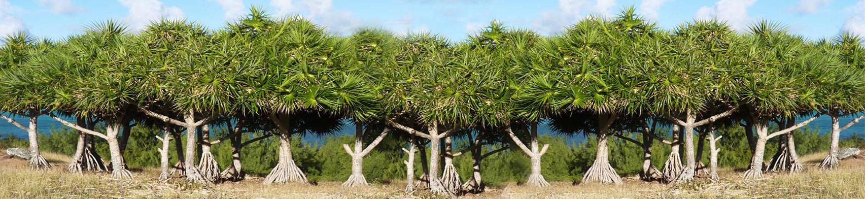 about_us_bakwa_tree-1