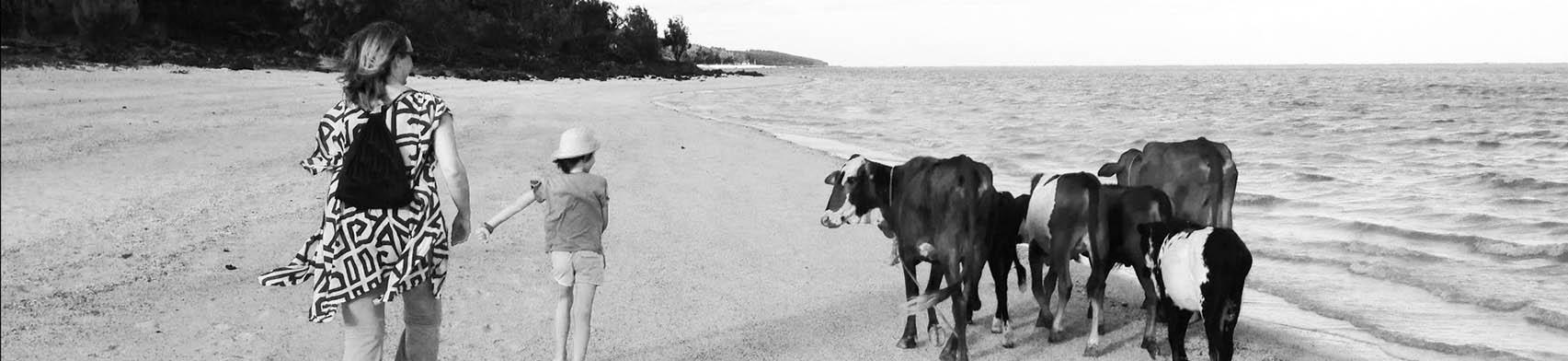 cattle_on_the_beach_bakwa_lodge_rodrigues_bw