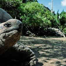 Riesenschildkröten Reservat